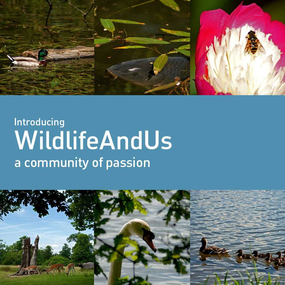Introducing WildlifeAndUs - A FreeTimePays Community of Passion